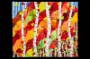 angelakenley-fractured-fall-forest-abstractions