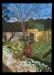 Terry Lee-Secret Garden, Juror Pick # 5