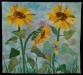 #13 Stenger-Sunflower full 300