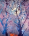 #15 Malvern-Forest Horizons Closeup