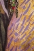IBMasters, Day of the Falling Purple Leaves, Susan Strickland, Closeup, Juror's Pick #2